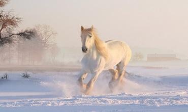 Лошадь в восточном гороскопе – мифы, история, легенды