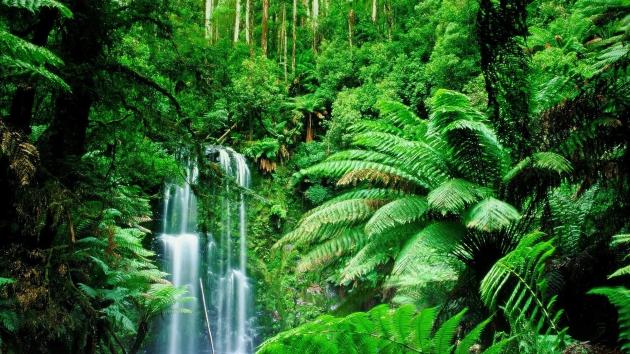 Пейзажи во сне – к чему снится природа