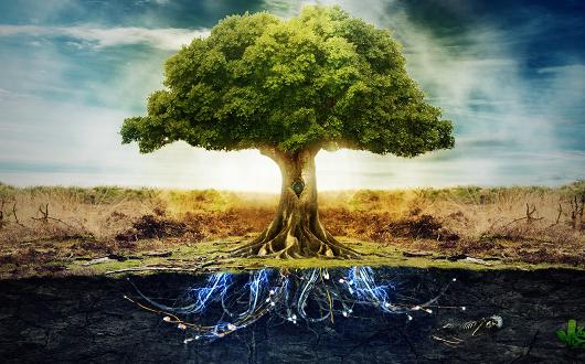 Стихии Дерево и Земля нестабильны