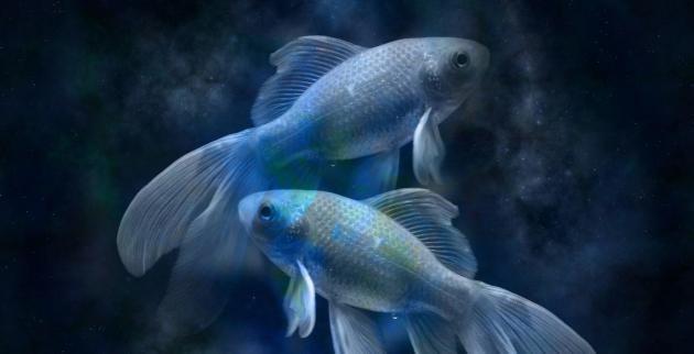 Общий гороскоп Рыбы – характер, карьера, финансы, социальные отношения