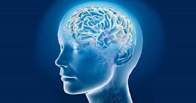 Головной мозг в 3D