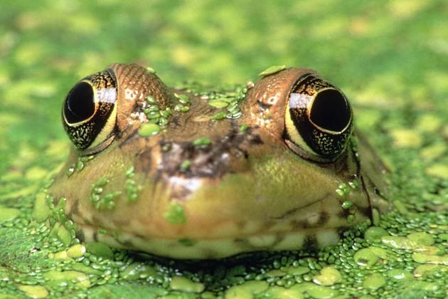 Жаба и болото